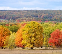 4. FALL COLOR TOUR