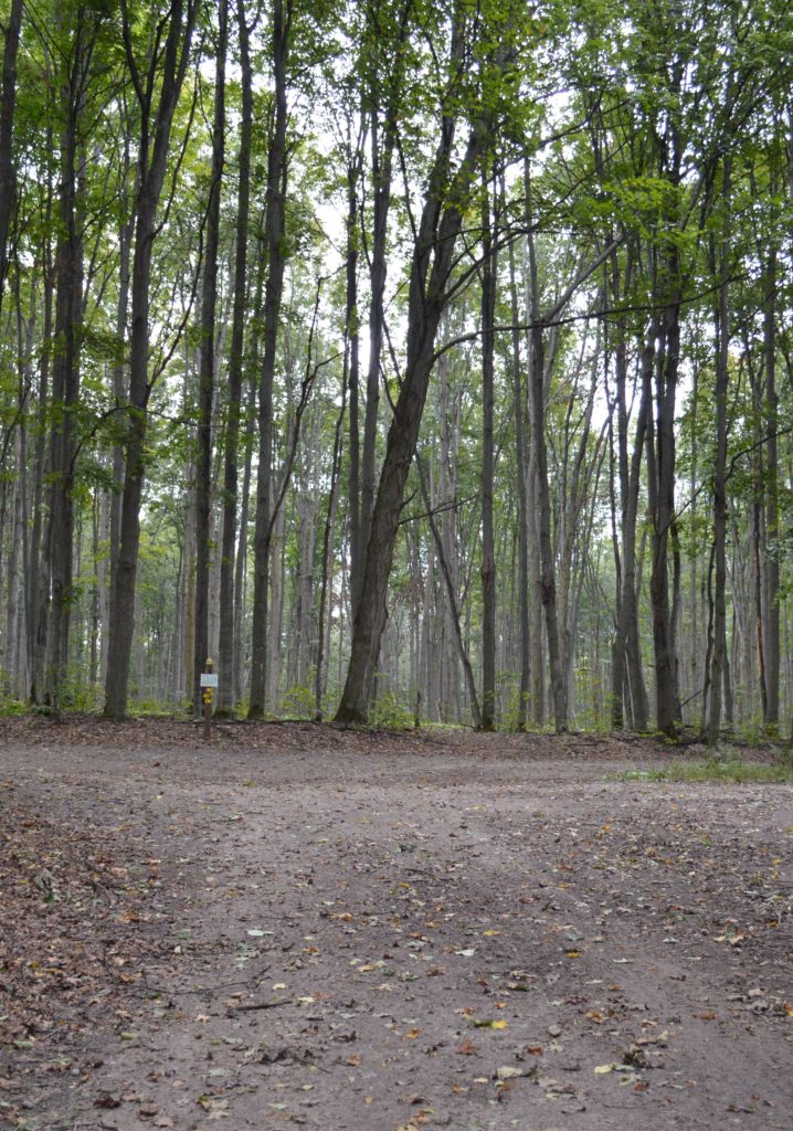 Much of the 800-acre property is mixed hardwood forest. Photo by Chris Engle
