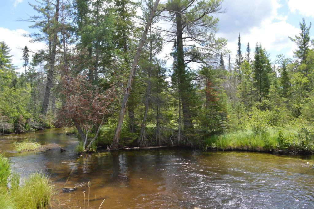 A fine fishing and swimming hole on the Upper Manistee River.