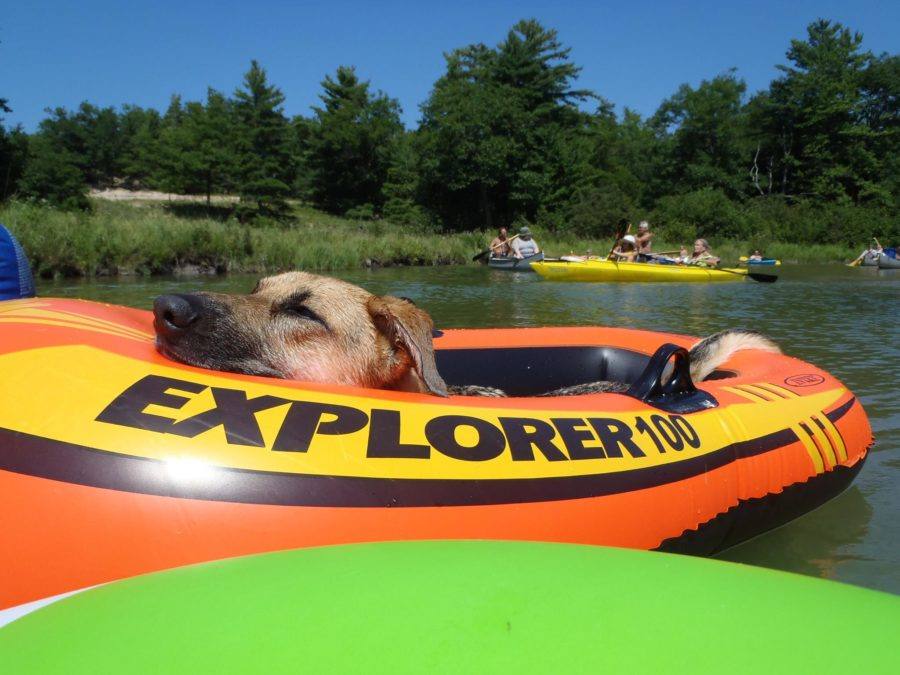 Sleeping dog floating in a raft down the river