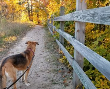 A German Shephard looks down the trail at Dead Man's Hill in the fall.